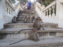 never seen so many monkeys as there was at this view point in Patchuap
