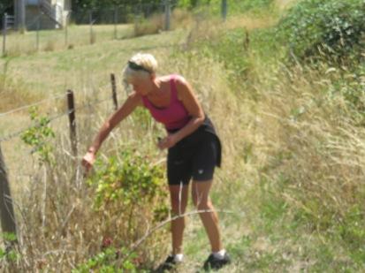 Ginette picking blackberries to go on our porridge