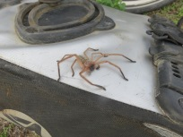 argh!! a spider on our pannier we later found one on Gary's top box whilst riding along