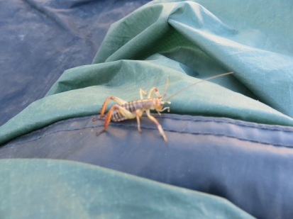 another bug in our tent